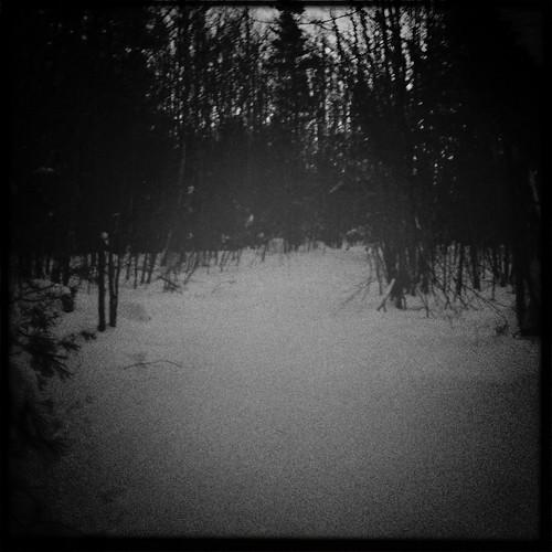 winter forest snowshoe wilderness