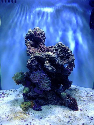 corals++