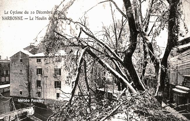 platanes mutiles par le poids de la glace à Narbonne les 19 et 20 décembre 1920 météopassion