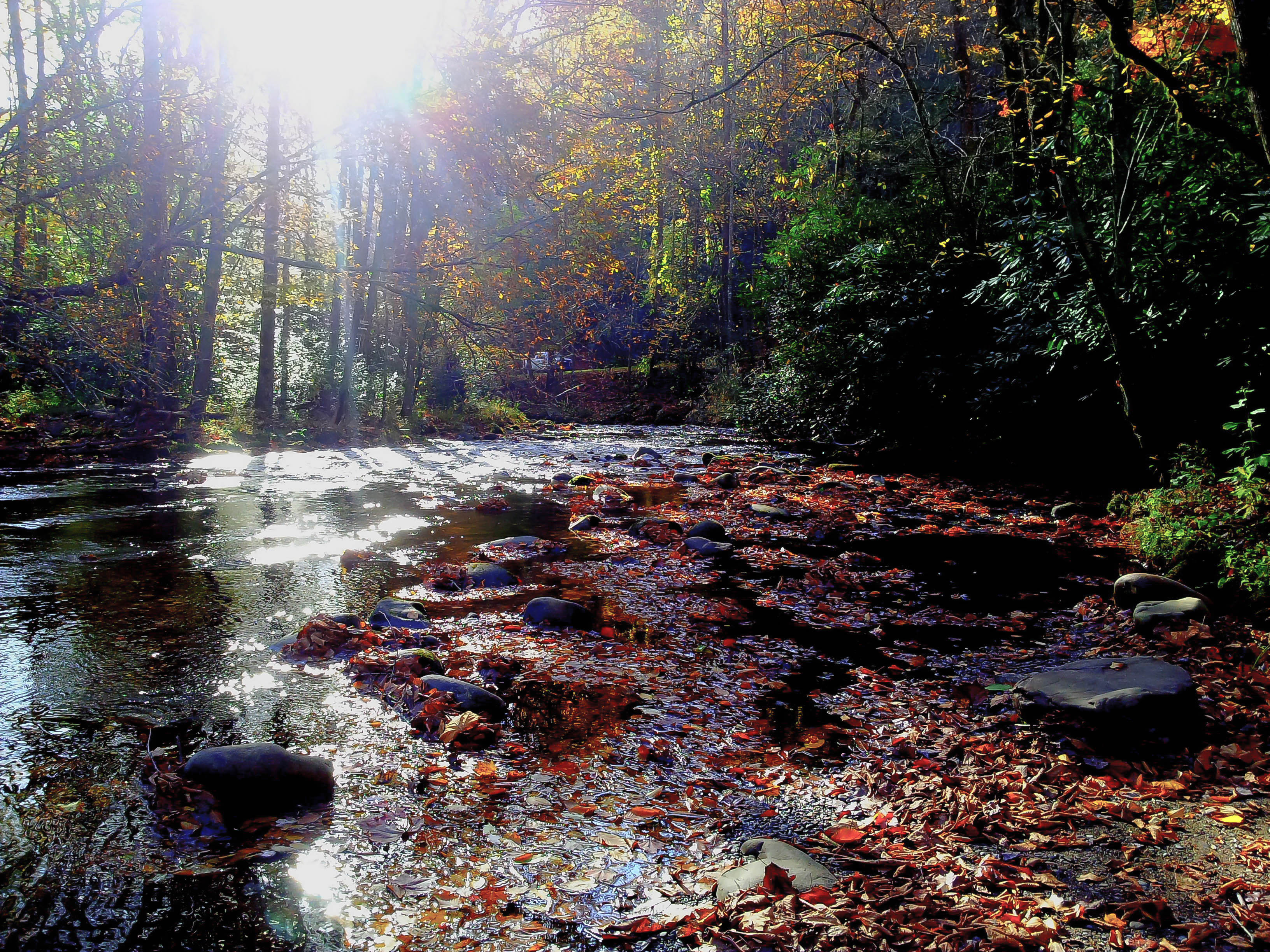 Elevation Of Stone Harbor Nj : Elevation of autumn dr maggie valley nc usa