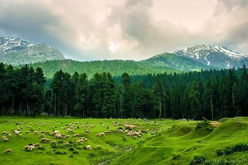 Sprawling meadows of Kashmir Valley!