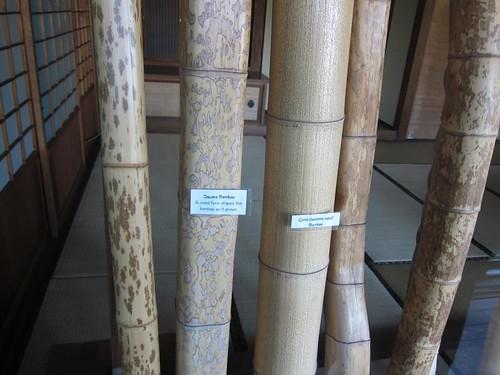 Hakone Japanese Gardens, Saratoga, CA, bamboo IMG_2384