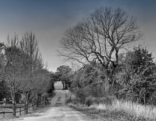 ranch trees blackwhite texas driveway lane boyd springtown farmfence wisecounty