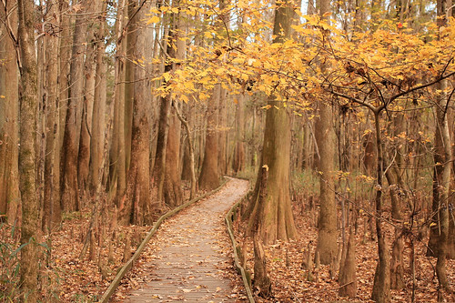 path southcarolina trail swamp congaree congareenationalpark t2i boardwalktrail canonef40mmf28stm
