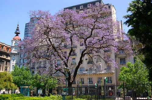 Buenos Aires in November (by: Beatice Murch, creative commons)