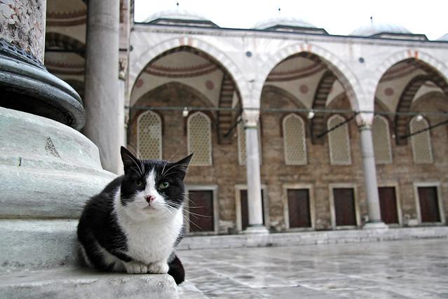 A cat in the Blue Mosque, Istanbul, Turkey イスタンブール、ブルーモスクのネコ