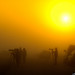 Photographers-in-Mist-at-Viera-Wetlands-Melbourne-Florida by Captain Kimo