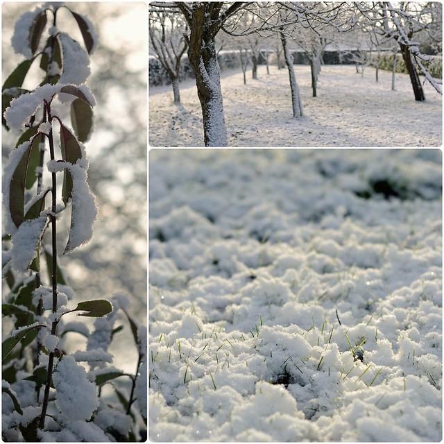 Neige, janvier 2013