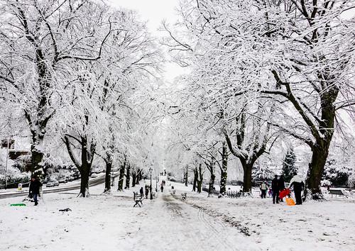 Bristol snow: Cotham Gardens