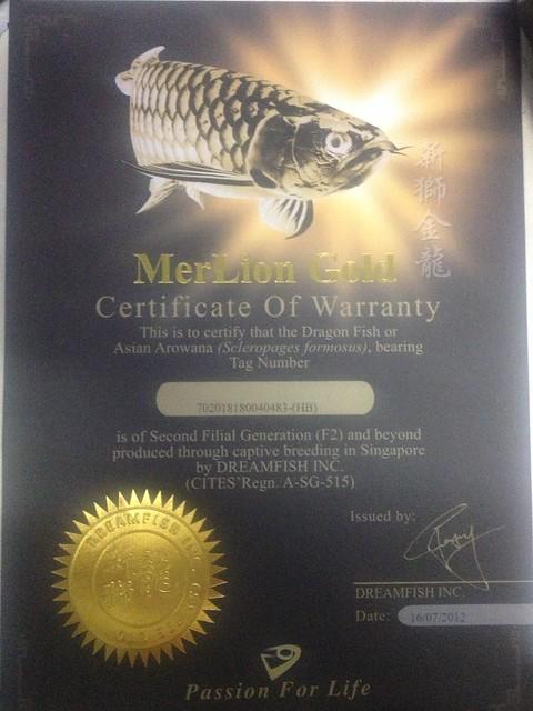 giấy xác nhận cá rồng chính gốc