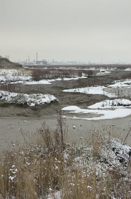 Snowy saltmarsh 2