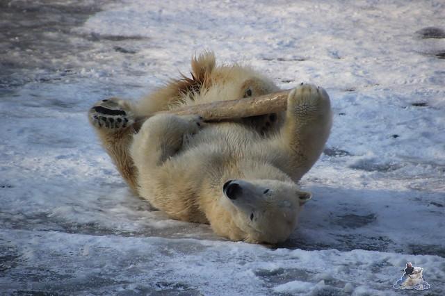 wie gut, dass der Stock nicht unter dem Eis liegt