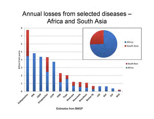 Health at the livestock-policy interface: Annual losses