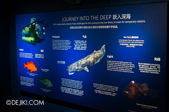 S.E.A. Aquarium - Educational displays