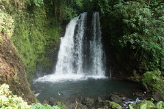 stream, waterfall, rainforest, body of water, watercourse, forest, jungle,