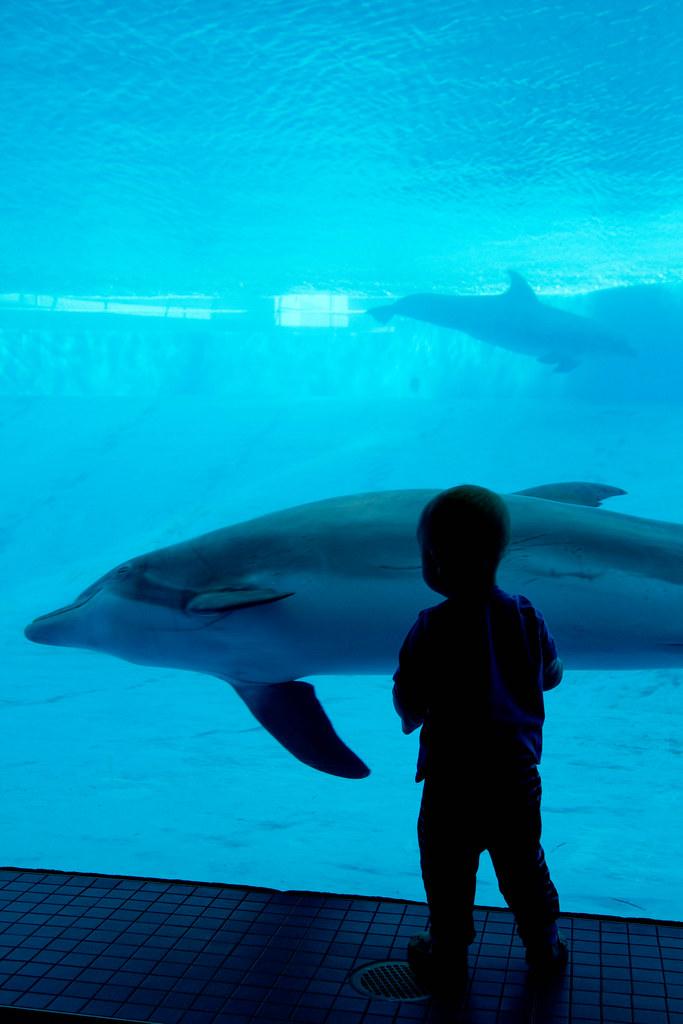 Texas State Aquarium-027.jpg