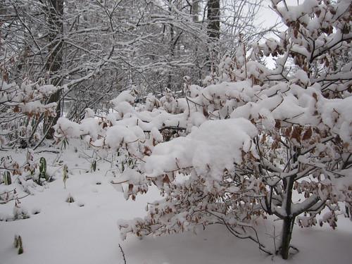 今年の12月は雪が多いです・・・ by Poran111
