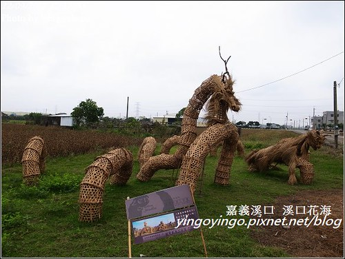 嘉義溪口_溪口花海20121209_R0010824
