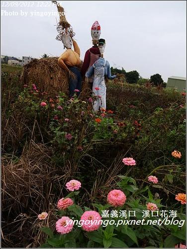 嘉義溪口_溪口花海20121209_R0010811
