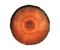 Rhodochrosite geode section