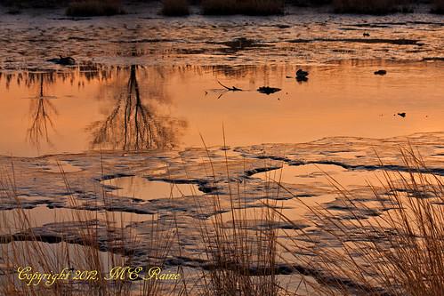 "sunset nature creek reflections wildlife wetlands marsh preserve sanctuary goldenhour marsh"" ""nature"" ""meadowlands"" ""mill nj"" ""secaucus"