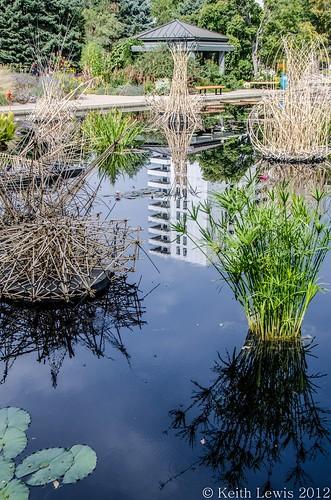 pool reflections pond denver reflexions denverbotanicgardens