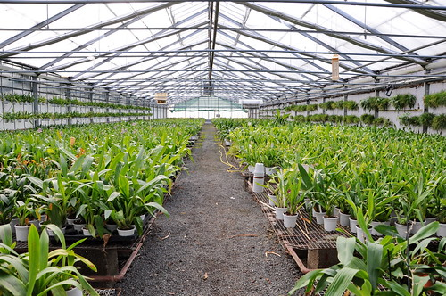 Greenhouses 02