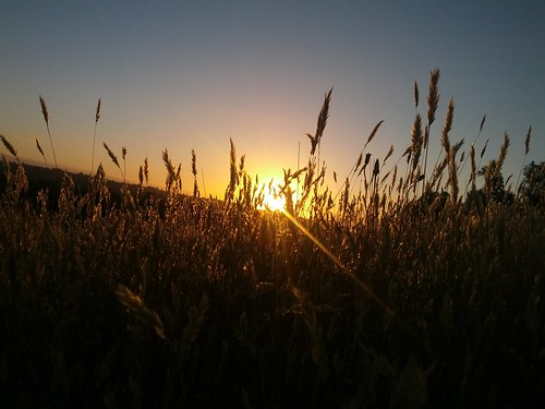 Summer sunset through the grass
