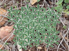 sacred geometry from nature