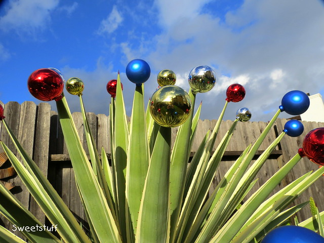 Christmas balls on my Agave augustifolia variegata 'Striped Caribbean Agave'