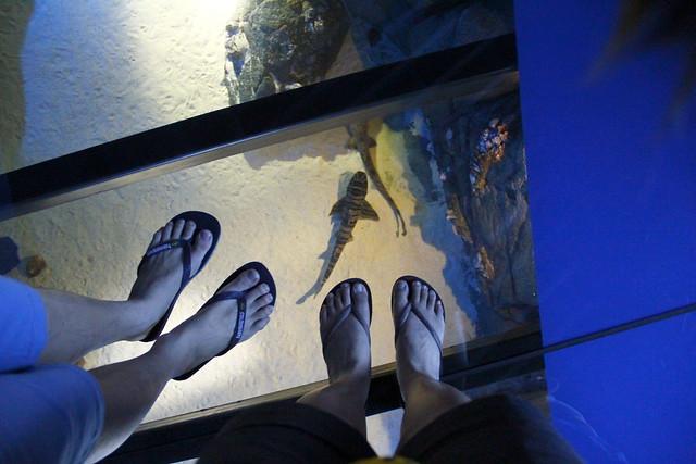 RWS S.E.A Aquarium 449