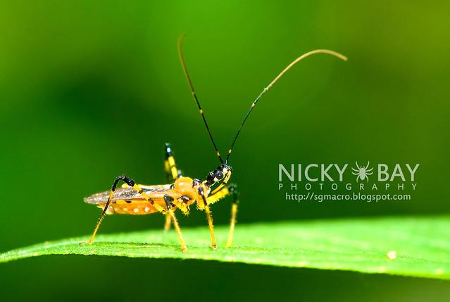 Assassin Bug (Reduviidae) - DSC_5398
