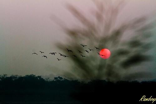 trees sunset red wallpaper sky orange sun india mountains nature water birds silhouette yellow clouds landscape evening twilight paradise sundown punjab hdr chandigarh sukhnalake dimness touristplace