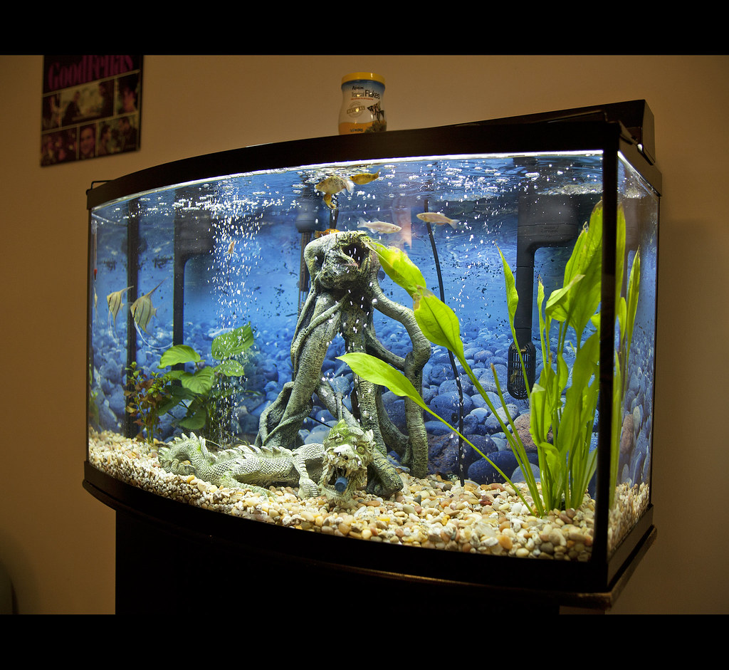 how to set up a fish tank for silver perch