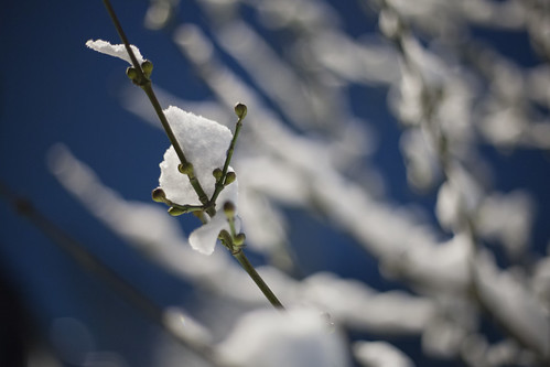 snow branch by YF [ yffoto ]