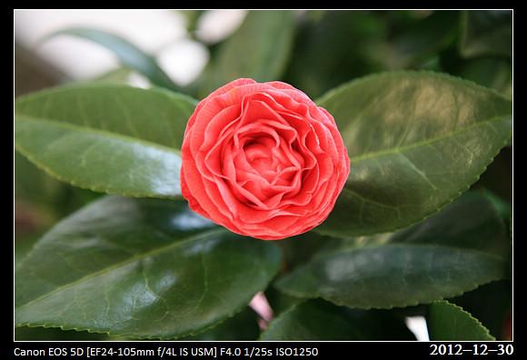 20121230_Flower19