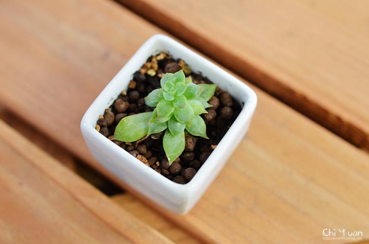 2012多肉植物27.jpg