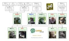 Gorilla Family - Kerkrade GaiaZoo (Version 3)