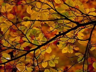 Autumn leaves, Utrecht.