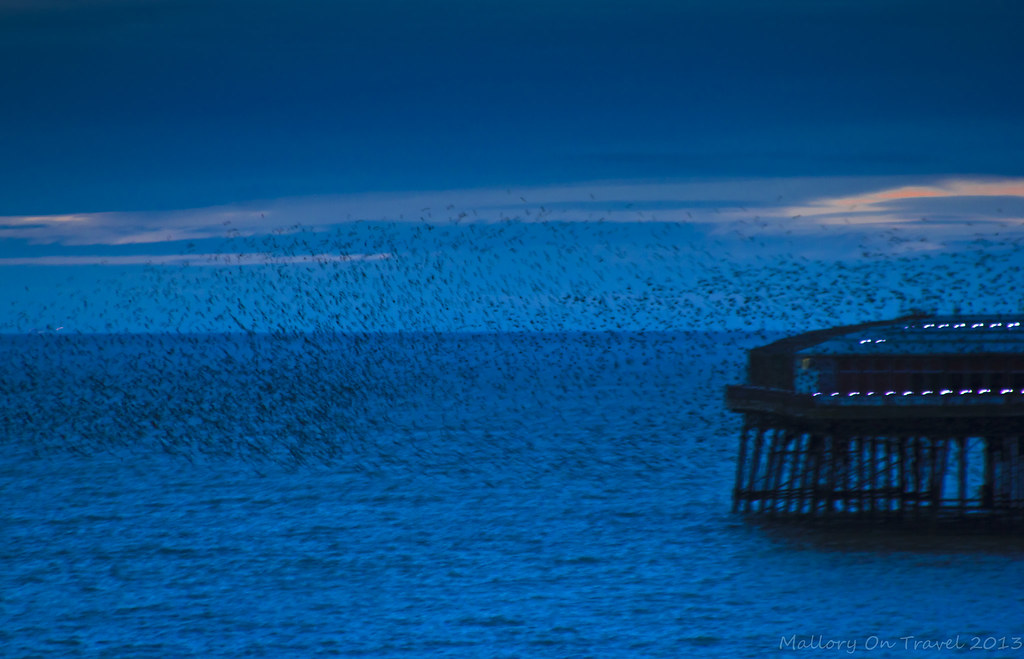 Flocking birds over North Pier on the Fylde Coast near Blackpool on Mallory on Travel, adventure, photography Iain Mallory-300-7