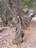 Kreta 2005-2 077