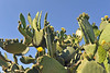 Kreta 2009-1 155