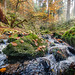 Silberbachtal # 14 - Bach, Herbstlaub und bemooste Felsen - Creek, autumn foliage, and mossy rocks