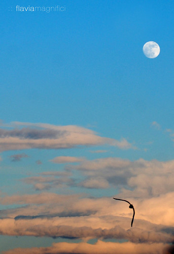 volo-luna by fla via