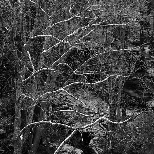 Hocking Hills: Branches