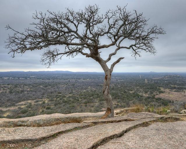Enchanted Rock Oak Tree