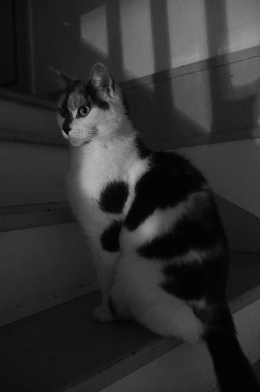 Cat (B&W)