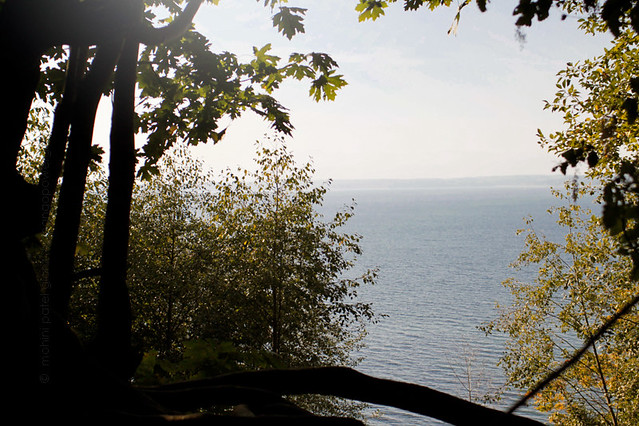 looking through nature's window in carkeek park