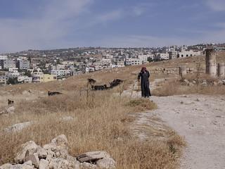 Image of  Jerash  near  Jarash. pastor cabra gerasa jerash jordania jordan panasonic lumix gh3 edgardoolivera microfourthirds microcuatrotercios mediooriente orientepróximo middleeast goat