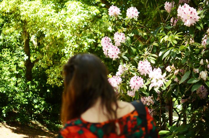 iolanthe flowers wombat hill b